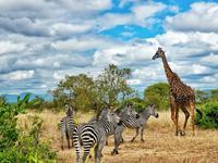 广州明年2月可直飞坦桑尼亚 飞行时间将缩短5个小时