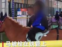 """成都""""旋转真马""""游乐项目被质疑 马业协会:不提倡"""