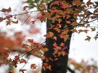 公园内3000多亩红叶正迎着料峭山寒次第变红 杨耀烨 摄