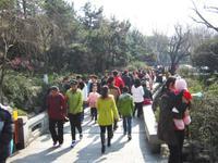 春节游预订量价齐升 家庭出游占比超七成