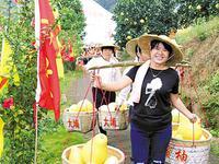 """93万吨广东梅州柚下月上市 """"12221""""卖完荔枝卖柚子"""