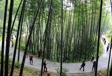 广东100条森林旅游特色线路 年度访客4310万人次