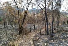 烟熏蜂窝引山火造成97万损失