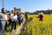 主要农作物良种覆盖率达99% 惠州力推优新品种