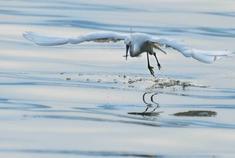 海丰湿地 梦幻仙境鸟儿天堂