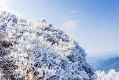 广东迎春雪现玉树琼枝美景