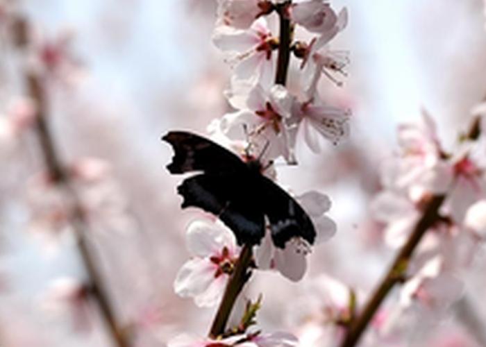 来一场桃花行 看最美春天