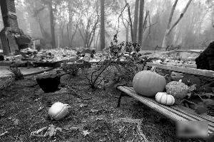 这是11月14日在美国加利福尼亚州天堂镇拍摄的山火过后的景象。