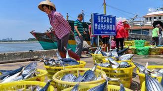 南海休渔:海南1.7万艘渔船回港