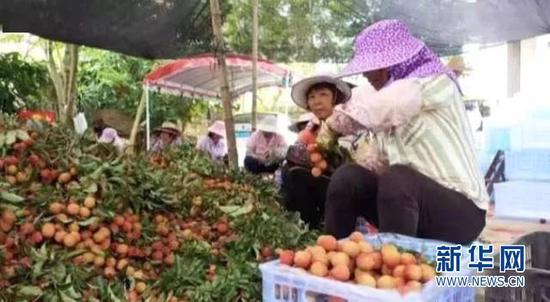 每年荔枝上市季乌塘镇便热闹了起来每年荔枝上市季乌塘镇便热闹了起来。新华网发
