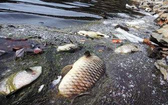 珠海捞死鱼发现非本地品种