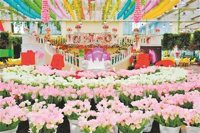 郁金香在百万葵园盛放