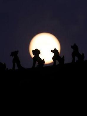 """北京夜空上演十五的月亮""""十四圆"""""""