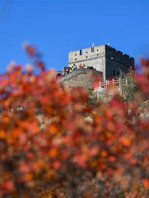长城秋色展画卷 霜叶红于二月花