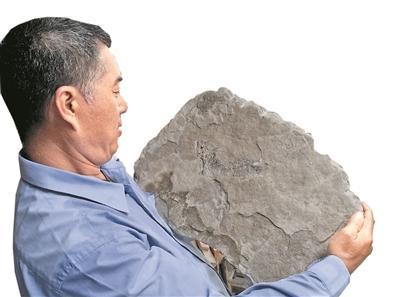 赵灿辉抱起一块鱼化石。