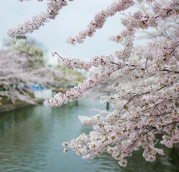 @行者老湖:2018京都10大热门赏樱之地
