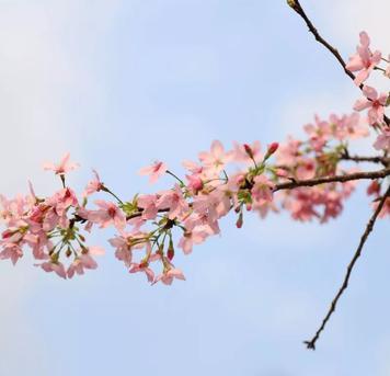 湖水:广州春色关不住,快来赏花吧