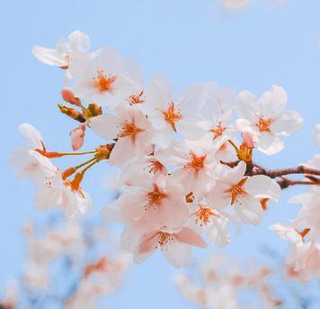 旅图学长:三月踏青赏花摄影指南