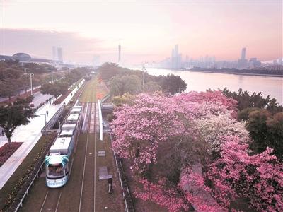 广州有轨电车线网规划修编 未来重点考虑外围城区
