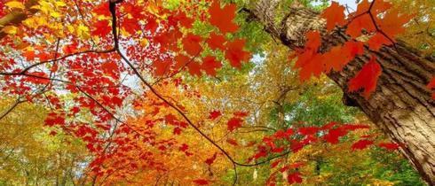 全国各地最宜人的秋景