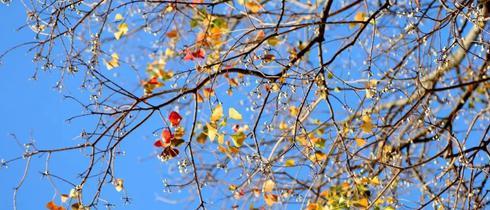 迷人的广州秋天