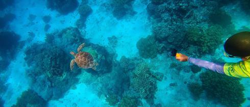 去阿波岛浮潜看海龟水中畅游