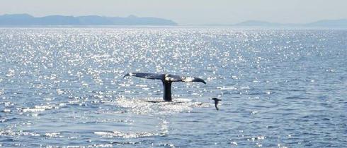 挪威安德内斯的观鲸之航