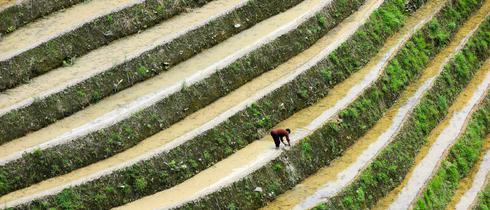 桂林梯田的绝美耕耘图