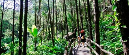 穿越神秘童话森林