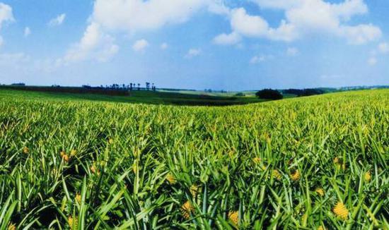广东将投入百亿元 打造全国性农业创新开放平台