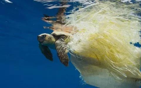 海洋垃圾致使海龟因缠绕而无法进食或窒息死亡事件频发
