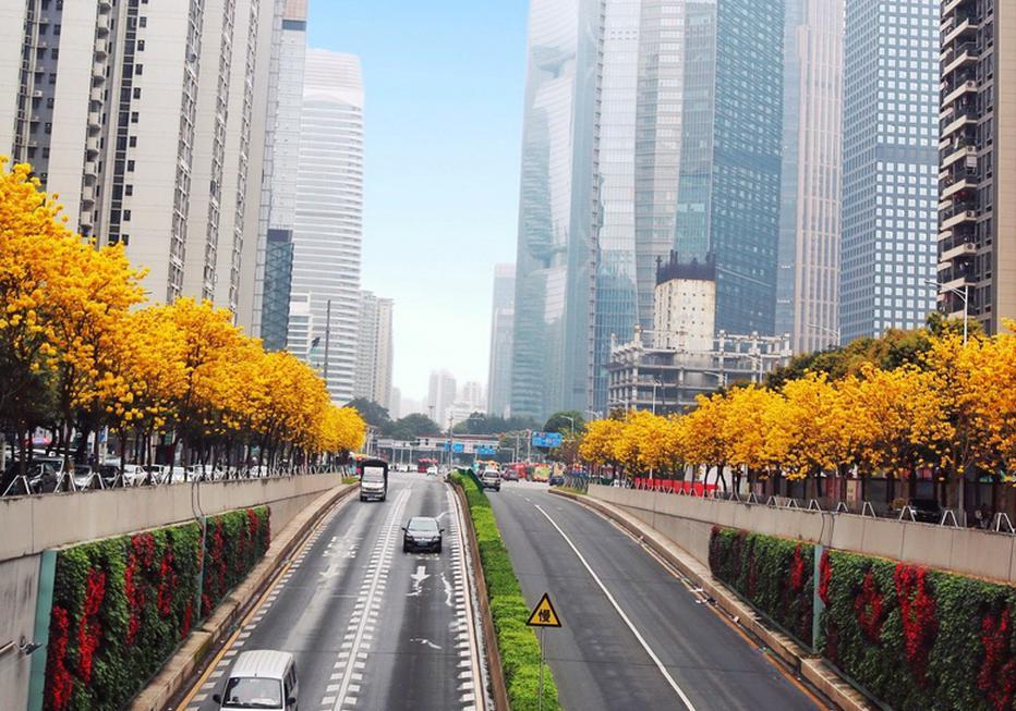 花都开好了 广州天河超美大片来袭