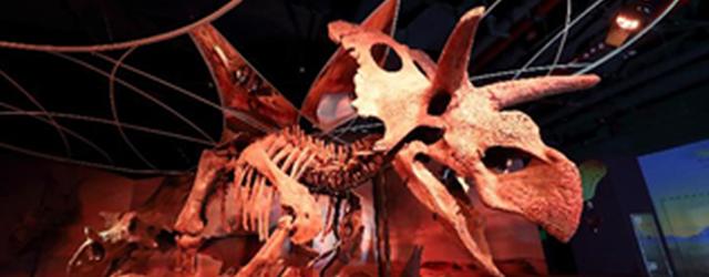 来正佳看梅杜莎恐龙 一起称霸