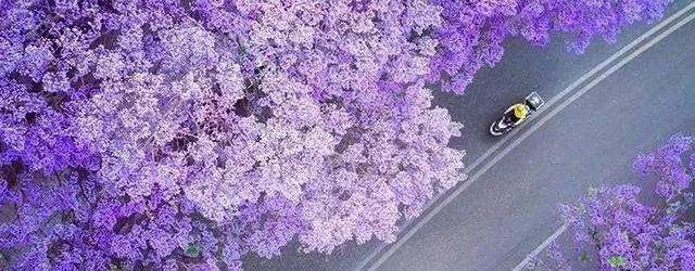 紫色花海包围这城
