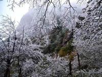 官方证实:广东真的下雪了 清远凌晨4-6点间飘了雪