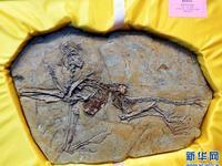 8块流落欧洲的恐龙和鸟化石归乡