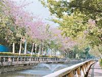 广州将推动河长制落地生根 落实三年行动计划