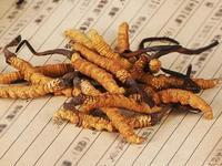 冬虫夏草被指不含虫草素 专家:是否抗癌与之无关