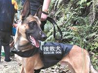 佛山蓝天救援队参与过上百次救援