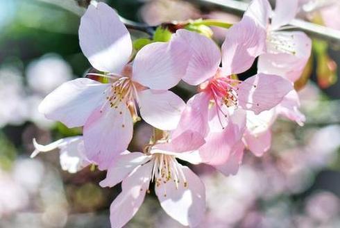 与花邂逅 春日华农赏花记