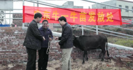 牛羊养殖基地启动仪式上,出席活动的领导嘉宾代基地向贫困户发放牛苗。