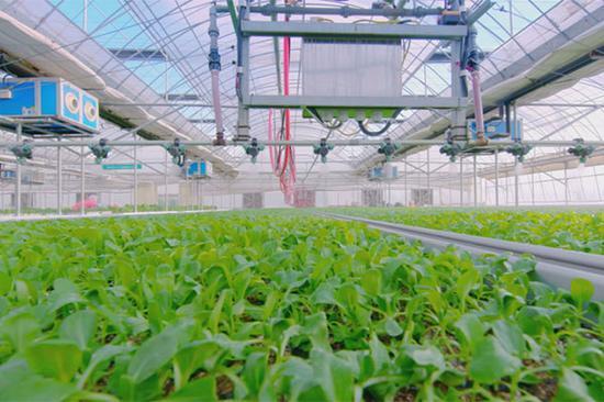 科学化养殖的蔬菜大棚