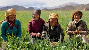 绿哈达行动:青藏高原万亩植绿