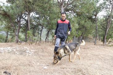 公安部昆明警犬基地李警官示范松露犬搜寻松露