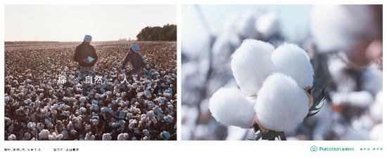上田義彦《棉·自然·人》作品