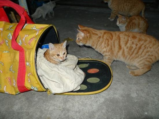 推广流浪猫绝育放归项目,大力改善流浪猫生存状况和福利。