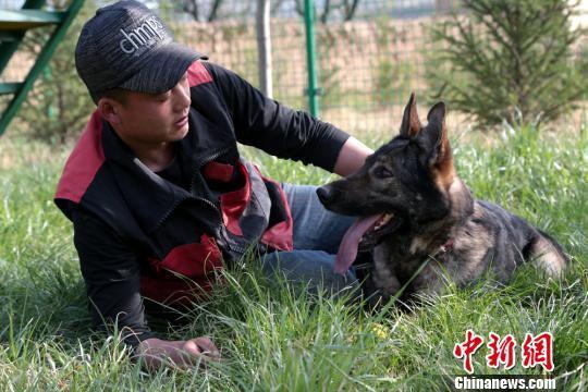 """图为景少敏和接受训练的犬只""""谈心""""。 郑兵 摄"""