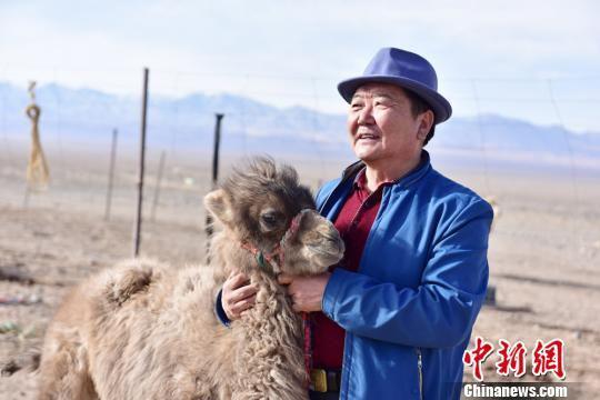 图为前来购买驼奶的客人抚摸驼羔。 曹雪梅 摄