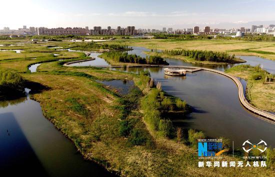初夏时节,祁连山下的甘肃省张掖国家湿地公园湖水碧蓝、绿草如茵,呈现出一派生机盎然的美丽景象。新华网发(陈礼摄)