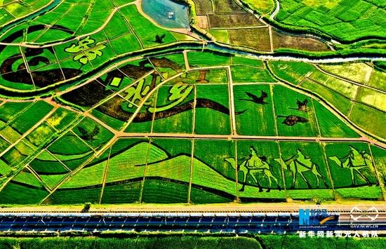 这是近日航拍的甘肃张掖市甘州区乌江镇新河田园综合体稻田景观。